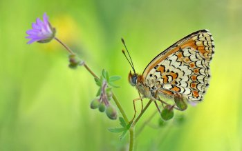 Animal - Butterfly Wallpapers and Backgrounds ID : 419606