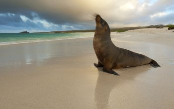 Tier - Sea Lion Wallpapers and Backgrounds ID : 419848