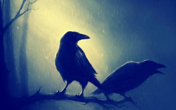 Animal - Raven Wallpapers and Backgrounds ID : 420440