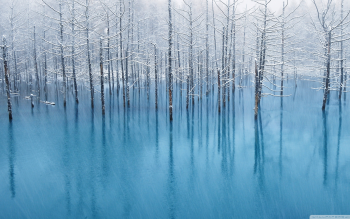 Earth - Winter Wallpapers and Backgrounds ID : 421590