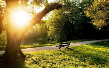 Man Made - Bench Wallpapers and Backgrounds ID : 421607