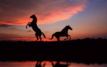 Animal - Horse Wallpapers and Backgrounds ID : 422955