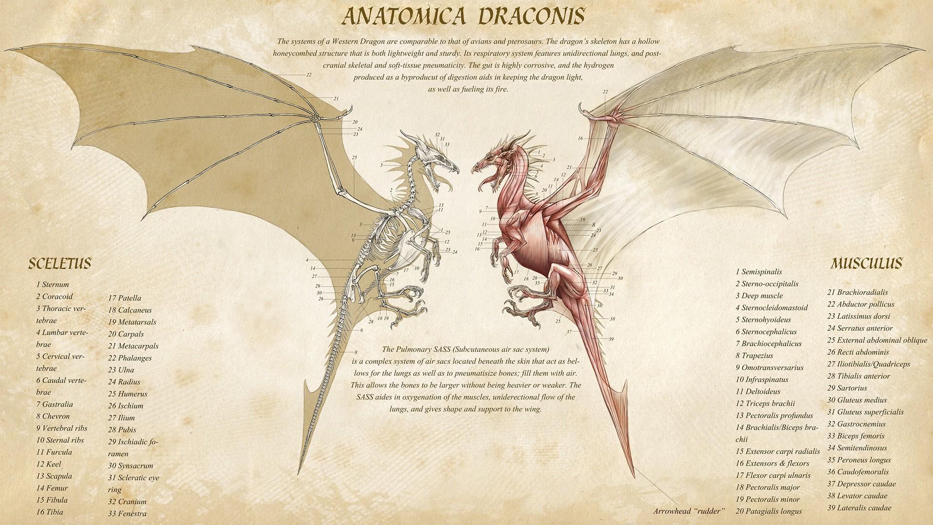 Dragon Anatomy HD Wallpaper | Background Image | 1920x1080 | ID ...