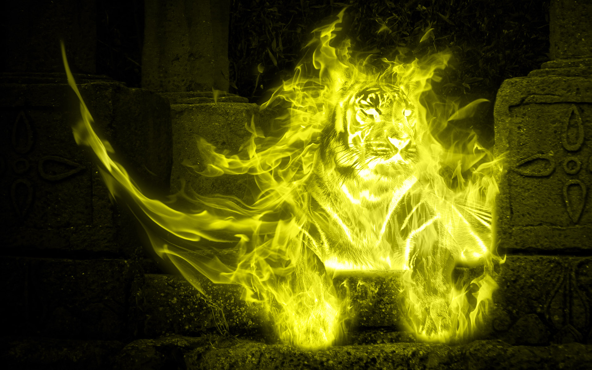Tiger on fire Full HD Wallpaper and Background   1920x1200 ...