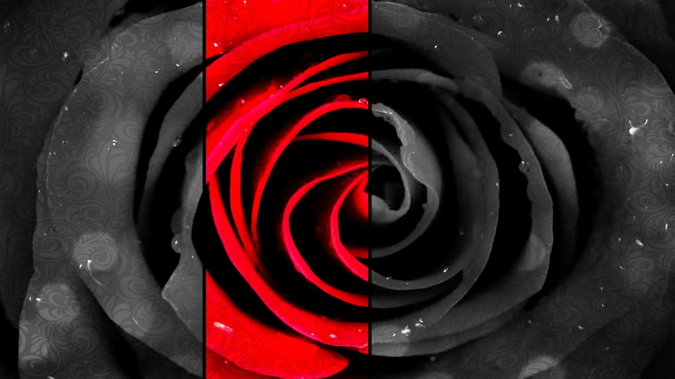 Artistic - Flower  Rose Wallpaper