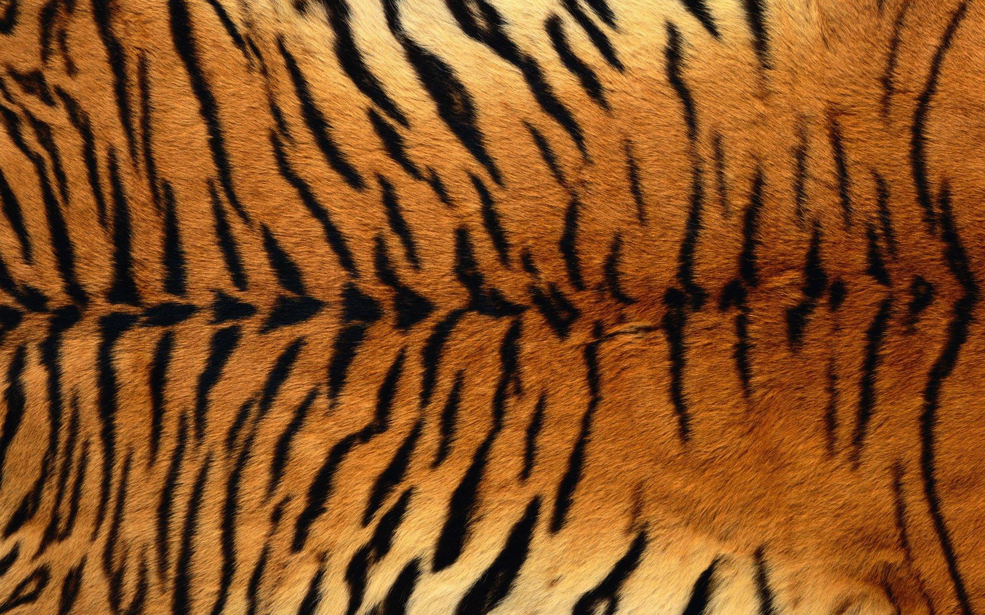 Tiger Print Wallpapers ID424869