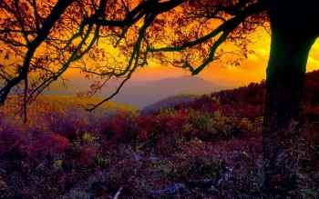 Tierra - Otoño Wallpapers and Backgrounds ID : 424174