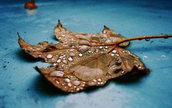 Earth - Leaf Wallpapers and Backgrounds ID : 424176