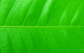 Earth - Leaf Wallpapers and Backgrounds ID : 424896