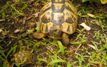 Animalia - Tortuga Wallpapers and Backgrounds ID : 425265