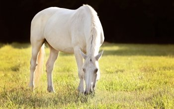 Animal - Horse Wallpapers and Backgrounds ID : 425267