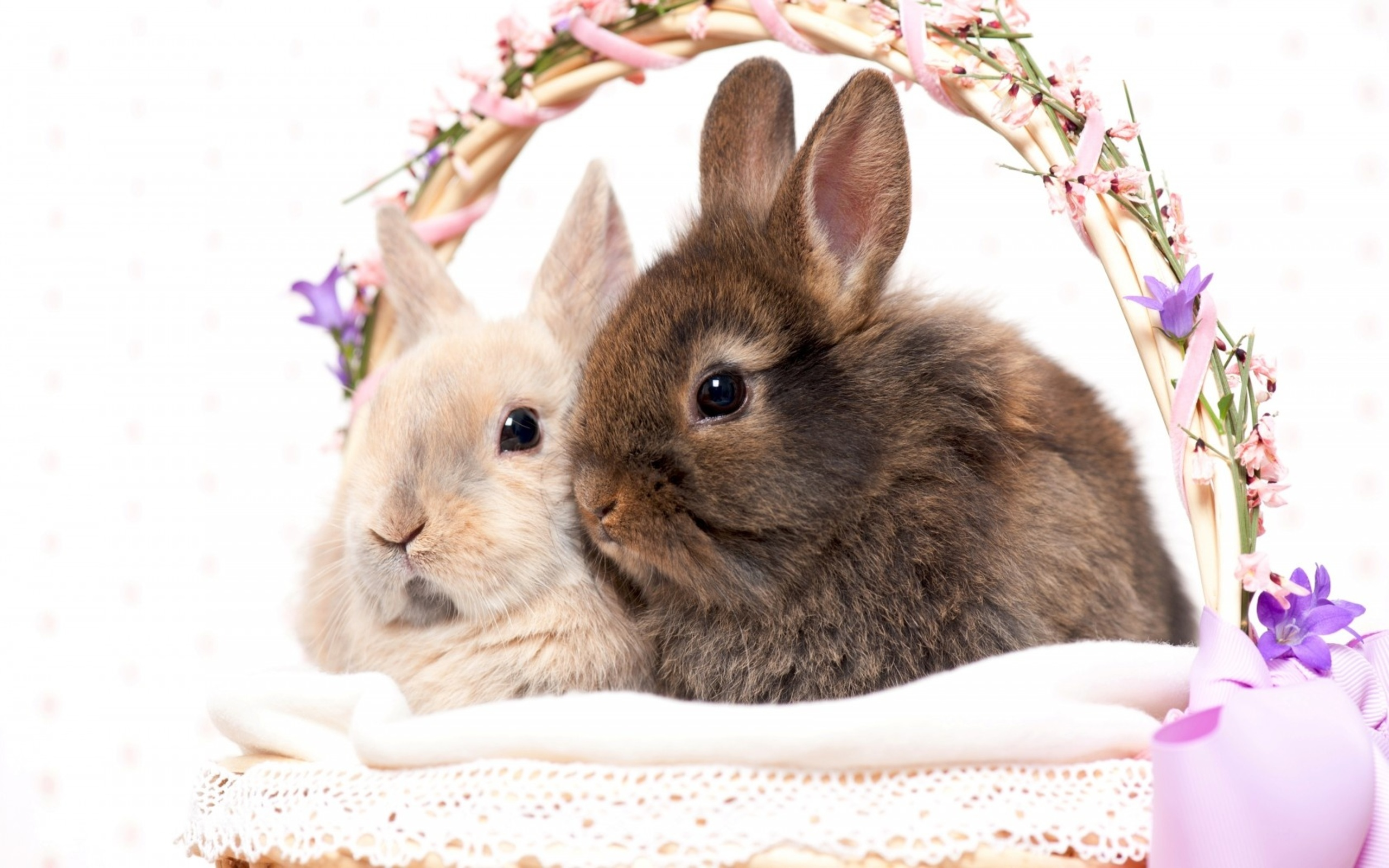 274 Rabbit Hd Wallpapers Background Images Wallpaper Abyss