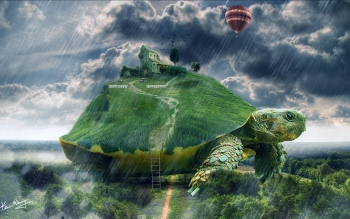 Animal - Turtle Wallpapers and Backgrounds ID : 426483