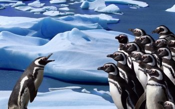 Animal - Penguin Wallpapers and Backgrounds ID : 427437