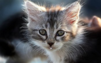 Animal - Cat Wallpapers and Backgrounds ID : 428346