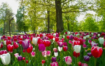 Earth - Tulip Wallpapers and Backgrounds ID : 428476