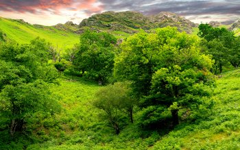 Earth - Tree Wallpapers and Backgrounds ID : 429319