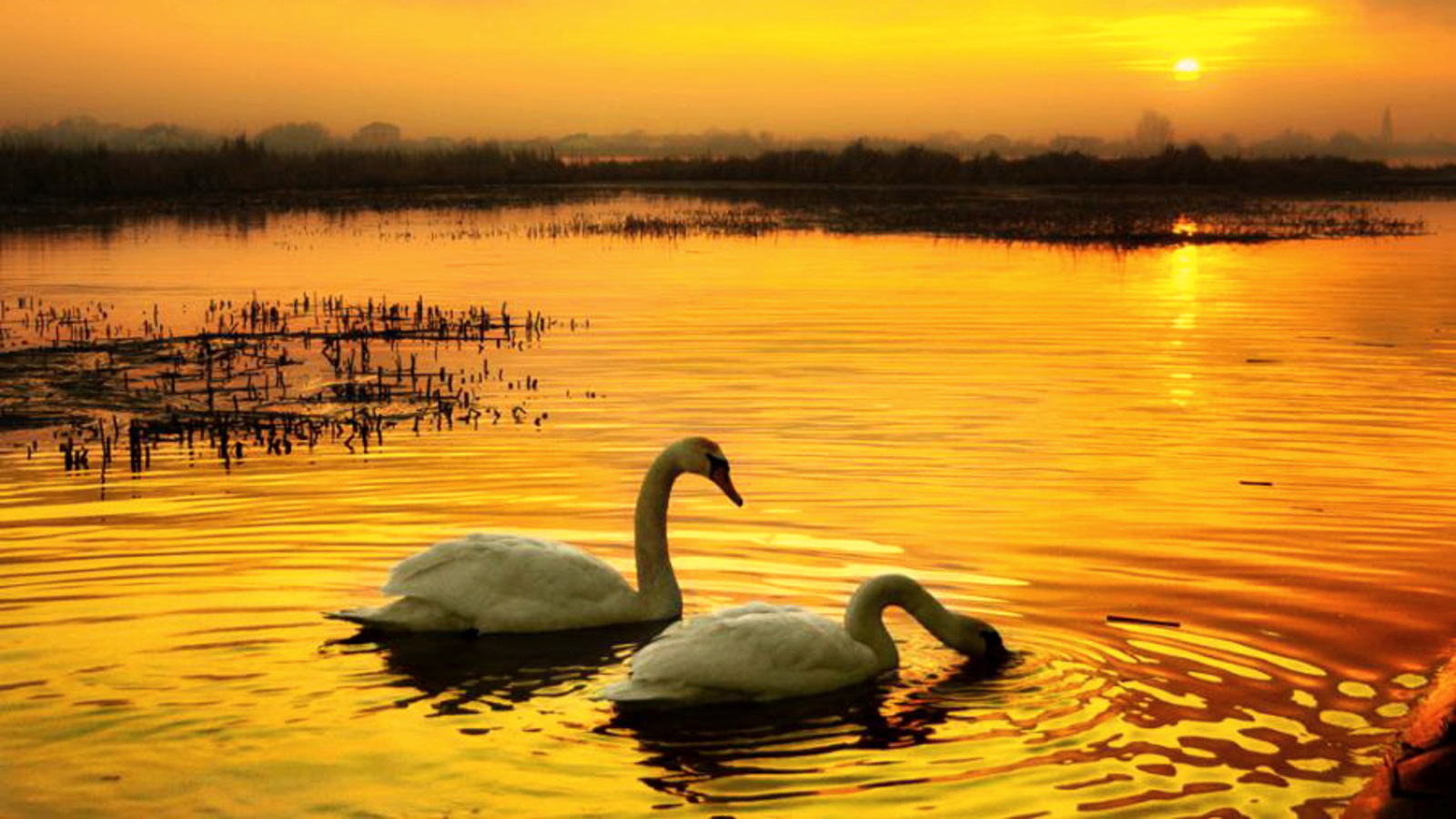 Swan lake wallpaper and background image 1600x900 id - Swan wallpapers for desktop ...