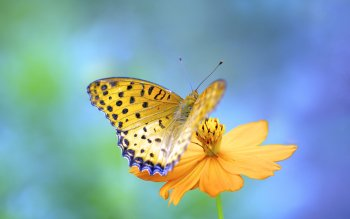 Animal - Butterfly Wallpapers and Backgrounds ID : 430449
