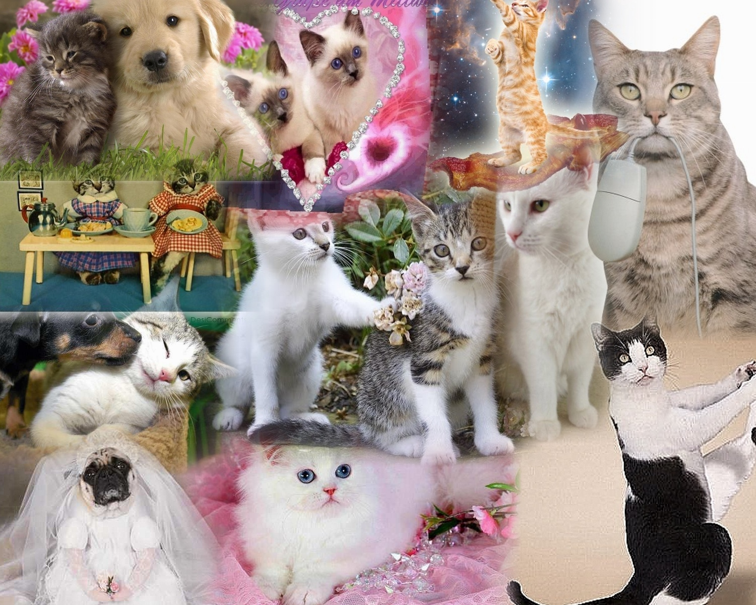 COLLAGE OF CATS Wallpaper and Background | 1500x1200 | ID ...