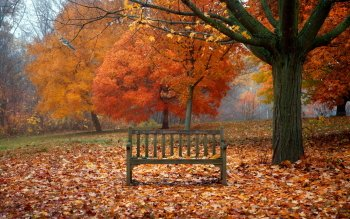 Photography - Autumn Wallpapers and Backgrounds ID : 435329