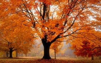 Earth - Autumn Wallpapers and Backgrounds ID : 435340