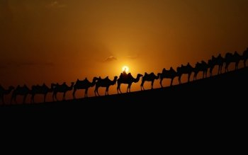 Фотографии - Camel Caravan Wallpapers and Backgrounds ID : 436624