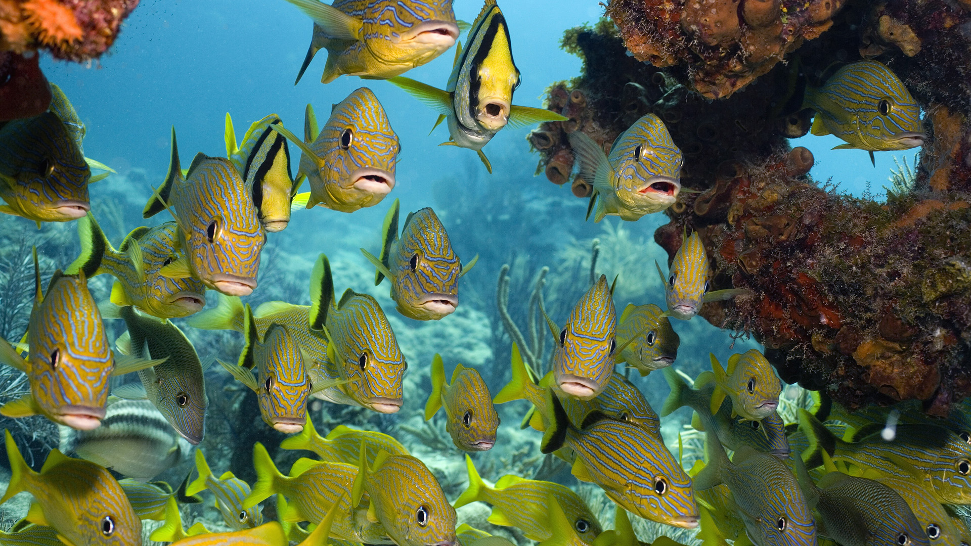 School Of Fish And Corals, Florida Keys National Marine