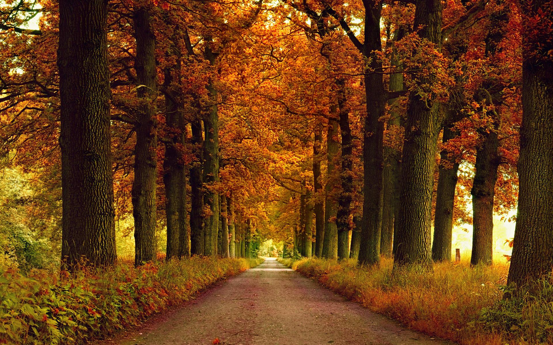 autumn park wallpaper 1920x1080 - photo #30