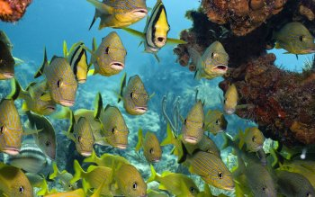 Animal - Fish Wallpapers and Backgrounds ID : 437790
