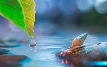 Animalia - Snail Wallpapers and Backgrounds ID : 438177