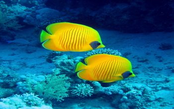 Animal - Fish Wallpapers and Backgrounds ID : 438395