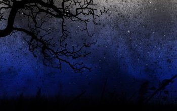 Fotografie - Night Wallpapers and Backgrounds ID : 438494