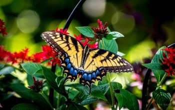Animal - Butterfly Wallpapers and Backgrounds ID : 440108