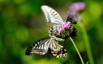 Animal - Butterfly Wallpapers and Backgrounds ID : 441519