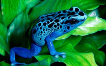 Animal - Frog Wallpapers and Backgrounds ID : 441805