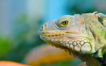 Animal - Iguana Wallpapers and Backgrounds ID : 441833
