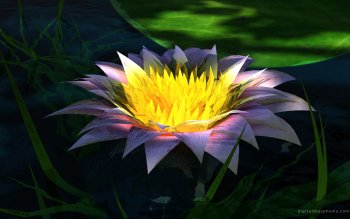 Земля - Lotus Wallpapers and Backgrounds ID : 442114