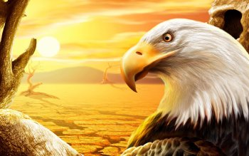 Animal - Eagle Wallpapers and Backgrounds ID : 443232