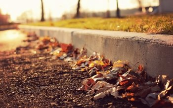Photography - Autumn Wallpapers and Backgrounds ID : 444820