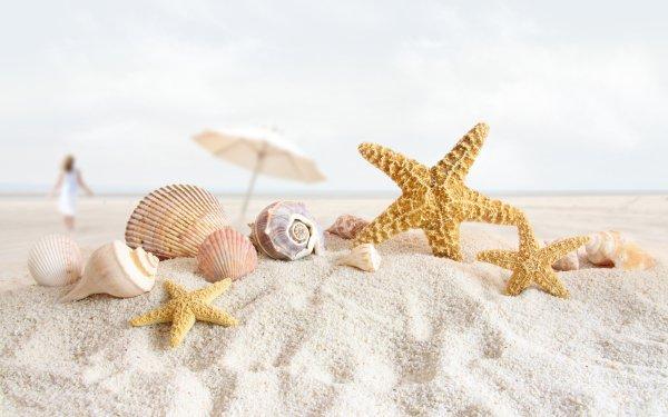 Photography Holiday Summer Shell Starfish HD Wallpaper   Background Image