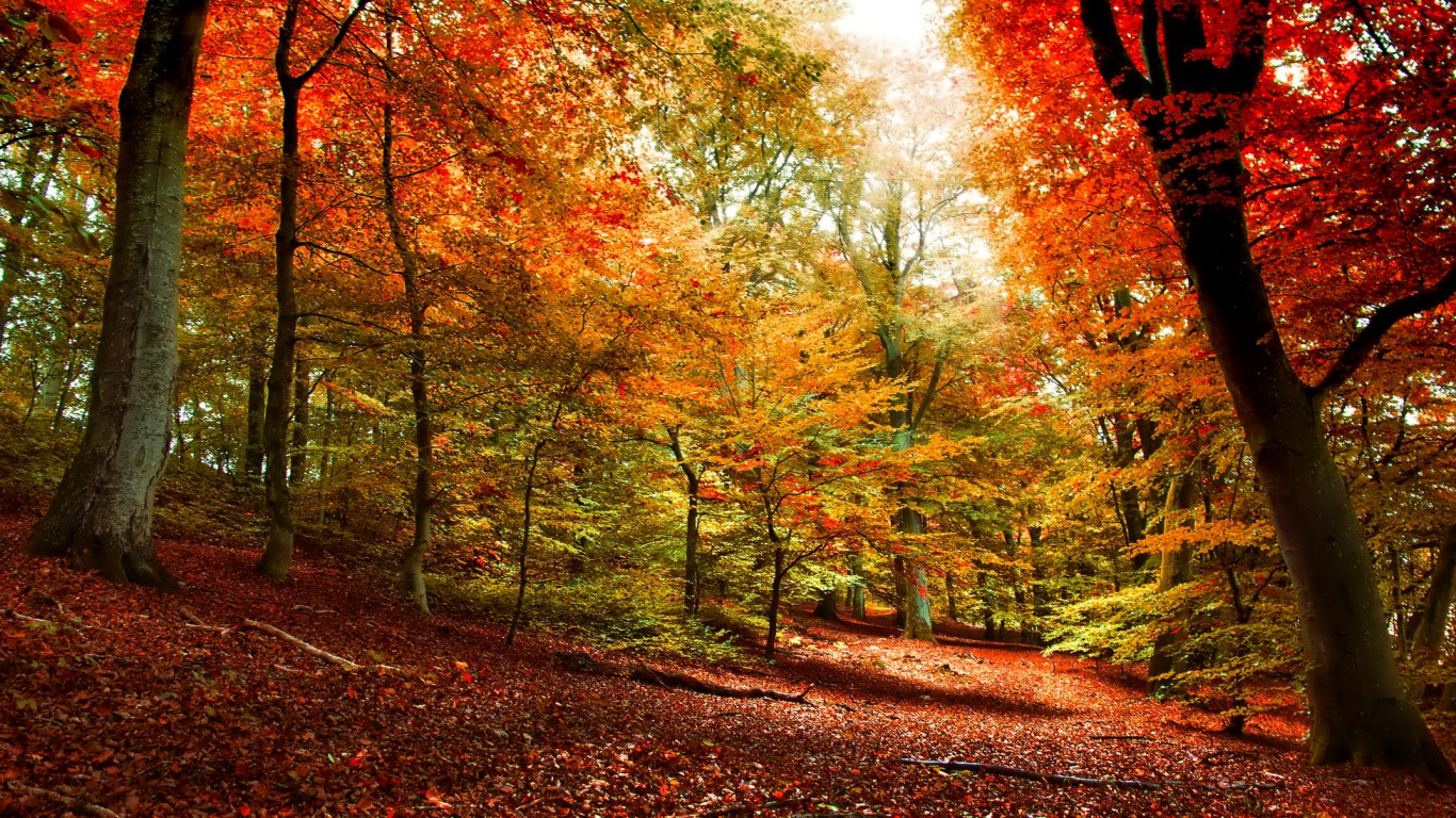 Earth - Forest  - Autumn Wallpaper