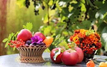 Food - Still Life Wallpapers and Backgrounds ID : 449837