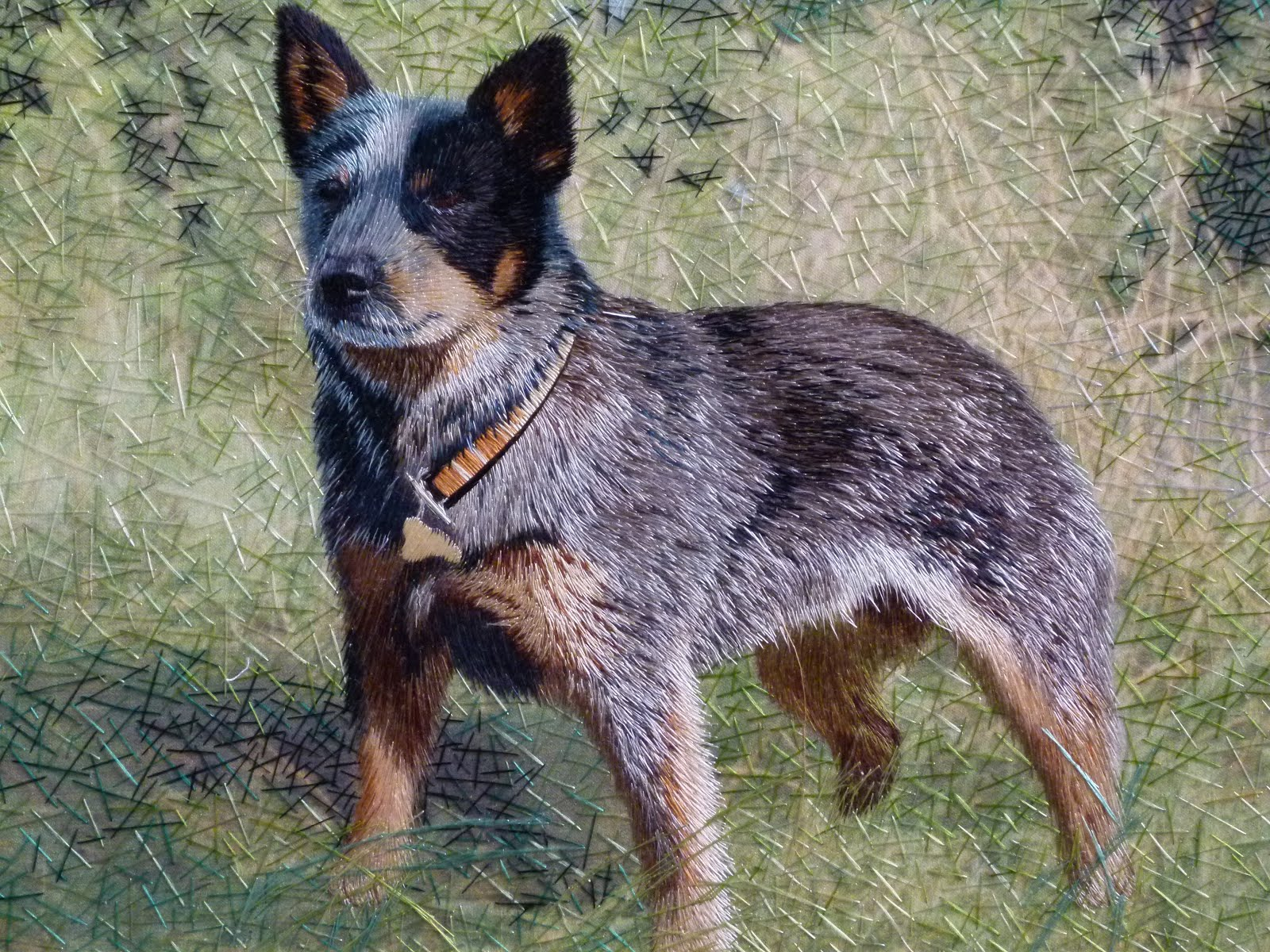 Blue Heeler Wallpaper And Background Image 1600x1200
