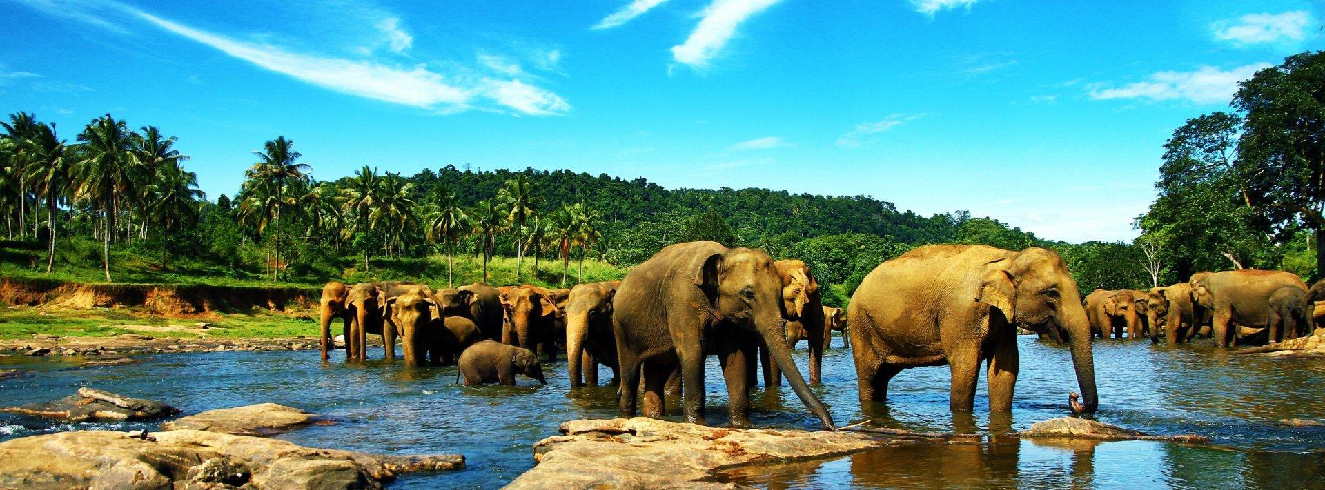 Elephant hd wallpaper background image 3200x1185 id - 2 screen wallpaper nature ...