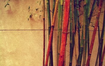 Tierra - Bamboo Wallpapers and Backgrounds ID : 457662