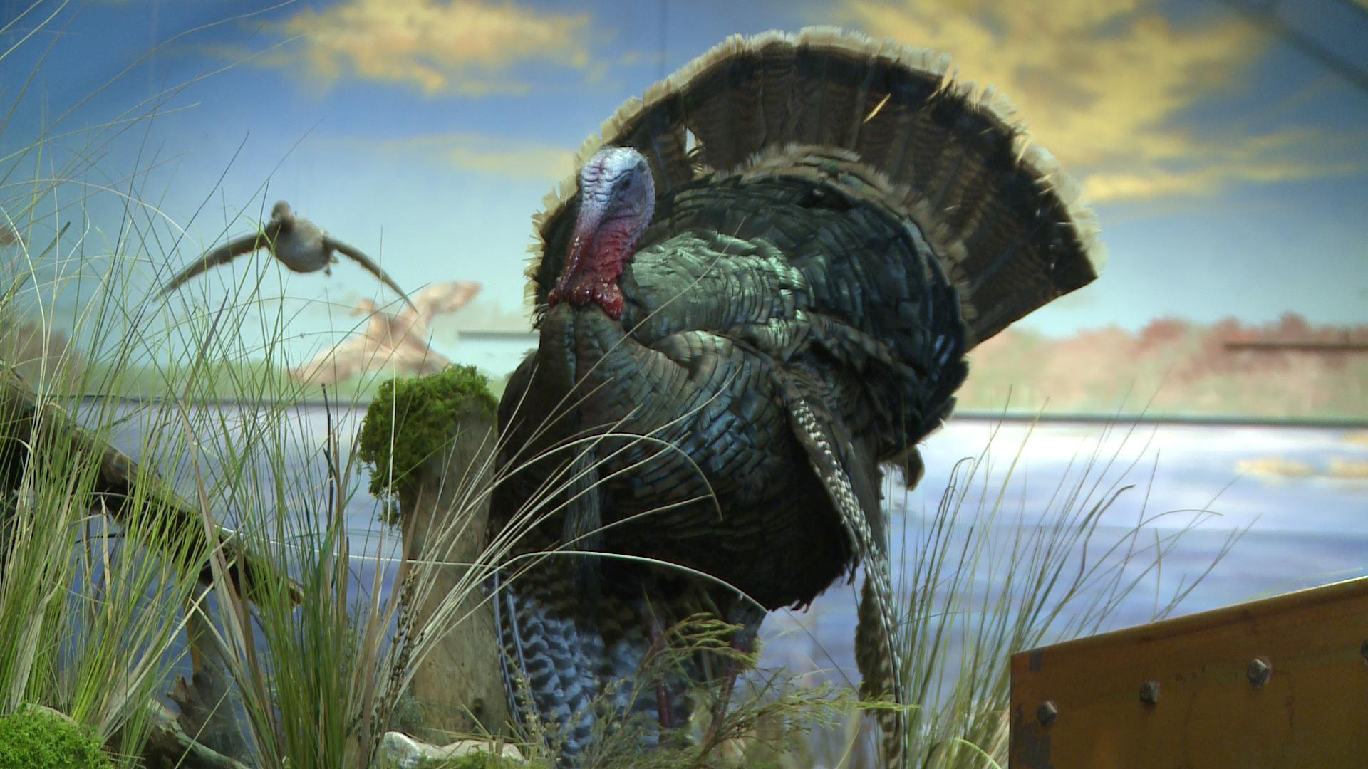 turkey wallpaper 1920x1080 - photo #9