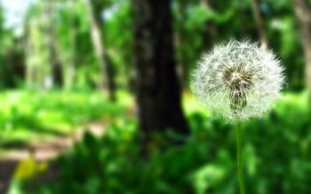 Earth - Dandelion Wallpapers and Backgrounds ID : 459165