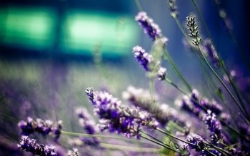 Earth - Lavender Wallpapers and Backgrounds ID : 459257