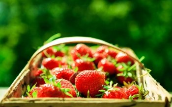 Alimento - Strawberry Wallpapers and Backgrounds ID : 459376